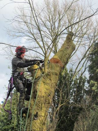 Haardhout zagen boom halveren in Bennekom