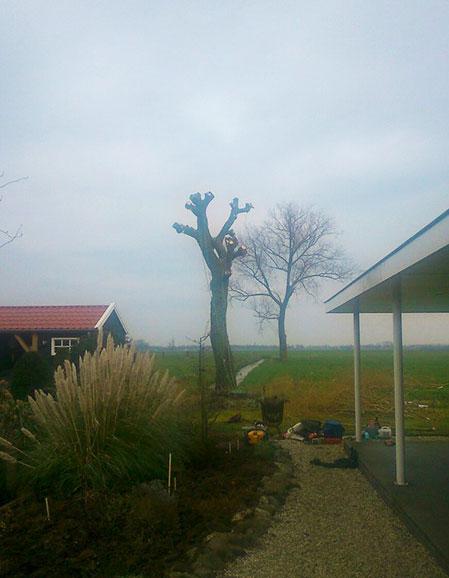 Kandelaberen wilg in Everdingen